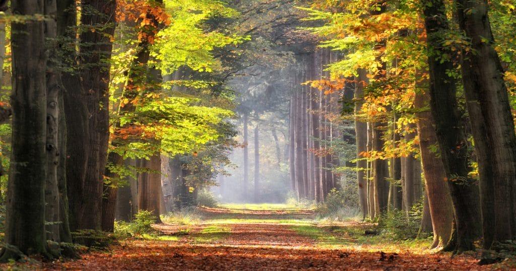 The Woodland Carbon Scheme Monthly Bulletin